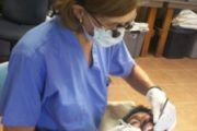 Dental Brigade: June 18th - June 27th